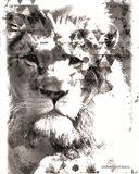 Modern Black & White Lion Art Print
