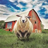 Sunday Afternoon Sheep Pose Art Print
