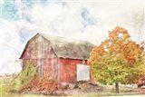 Autumn Maple by the Barn Art Print