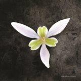 Contemporary Floral Trillium Art Print