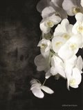 Contemporary White Orchids Art Print