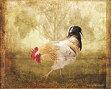 Vintage Scratching Rooster Art Print