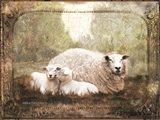 Vintage Ewe and Sleeping Lambs Art Print