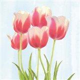 Fresh Spring Tulips III Art Print