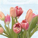 Fresh Spring Tulips IV Art Print