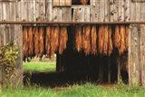 Tobacco Barn Art Print
