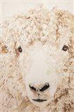 Woolly Art Print