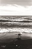 Seagull I Art Print
