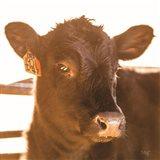 Baby Cow I Art Print