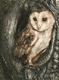 Barn Owl Roost Art Print