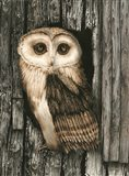 Owl Sentry Art Print