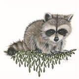 Baby Raccoon Art Print