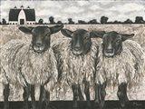 Three Sheep Art Print
