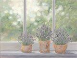 Lavender Pots Art Print