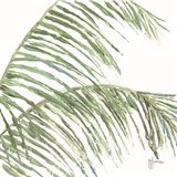 Two Palm Fronds I Art Print