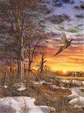 Autumn Ringneck Art Print