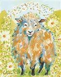 Daisy Fields Art Print