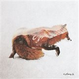 Fox - North Art Print