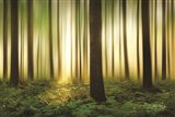Forest in Motion Art Print