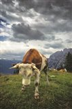 Bowing Cow Art Print