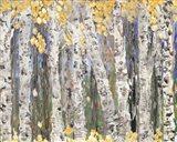 Yellow Leaf Birch Trees Art Print