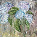 Hydrangeas in Bloom Art Print