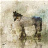 Horse Reflection II Art Print