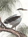 Perched Heron Art Print