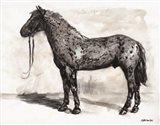 Horse Study 2 Art Print