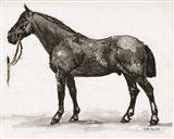 Horse Study 4 Art Print