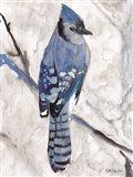 Blue Jay 1 Art Print