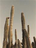 Desert Cacti Art Print