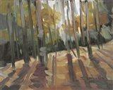 Backlit Woods Art Print