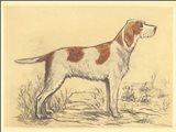 Hunting Dogs-Griffon Art Print