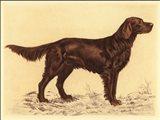 Hunting Dogs-Setter Art Print