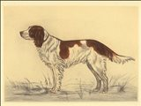 Hunting Dogs-Spaniel Art Print