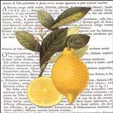 Citrus Edition I Art Print