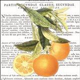 Citrus Edition II Art Print
