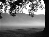 Fog in the Park I Art Print