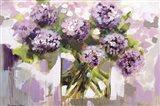 Blush Hydrangea Art Print