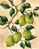 Italian Harvest - Limes Art Print