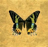Butterfly on Gold Art Print