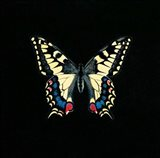 Butterfly on Black Art Print