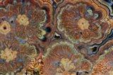 Flowering Tube Onyx, Mexico 1 Art Print