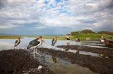 Marabou Storks, fish market in Awasa, Ethiopia Art Print