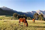 Horse herd grazing, Arkwasiye, Highlands of Ethiopia Art Print