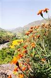 Tagetes plants and landscape, Ethiopia Art Print