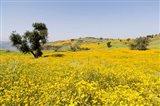 Flower Field, Niger seed, Semien Mountains, Ethiopia Art Print