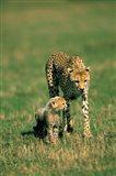 Kenya, Masai Mara Game Reserve, Cheetah with cub Art Print