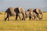 Africa, Kenya, Amboseli National Park, Elephant Art Print